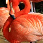 """Pink Flamingo 2"" by inspirationalphotocreatio"