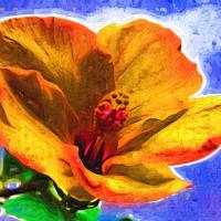 Orange Hibiscus Art Prints & Posters by Kirt Tisdale