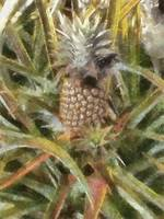 Pineapple Nest