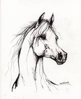 Arabian horse drawing