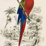 """Edward Lear (1812 - 1888), Parrot"" by motionage"