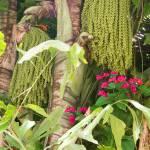 """Florida Floral"" by ralphnelsen"