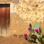"""Adobe Wall, Door, Blooming Cactus"" by charker"