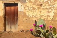 Adobe Wall, Door, Blooming Cactus