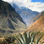 """Blue Agave and Andes Mountains, Inca Trail, Peru"" by RoupenBaker"