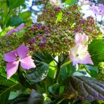 """""""Sunshine Garden"""" by vpicks"""