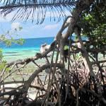 """Tropical Island"" by TNorth"