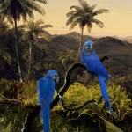 """""""Hyacinth_Macaws_in_Tropics"""" by spadecaller"""