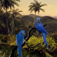 The Hyacinth Macaws of the Tropics Art Prints & Posters by I.M. Spadecaller