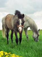 Equine photograph