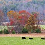 """""""Bear Country"""" by ajc401"""