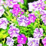 """Shades of Purple Petunias"" by SplitWindow"
