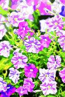 Shades of Purple Petunias