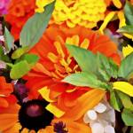 """""""Farm Flowers 2016 IK"""" by SplitWindow"""