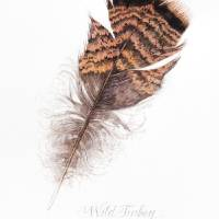 Wild Turkey Feather Art Prints & Posters by Sharon Morgio