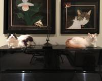 Cats on the Piano