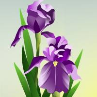 Bearded Iris Art Prints & Posters by Pixel Paint Studio