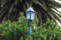 Lamp Post and Palm Trees