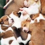 """""""Pile Of Puppies"""" by ldfranklin"""