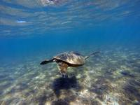 Moments with green sea turtles