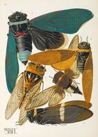 ZOOLOGIE - Insekten - Seguy, Emile Allain. Insects