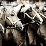 """Equine photograph"" by tarantella"