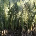 """Tropical Plants in Hoi An Vietnam"" by Ken"