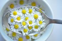Soup daisies