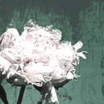 """ORL-7983-9 Elegant  Peony"" by Aneri"