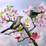 """Mockingbirds in Pink Dogwood Tree"" by spadecaller"