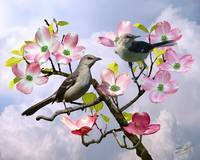 Mockingbirds in Pink Dogwood Tree