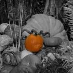 """""""Harvest"""" by memoriesoflove"""