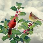 Cardinals on Tree Top