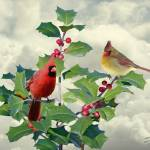 """""""Cardinals on Tree Top"""" by spadecaller"""