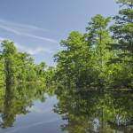 """Cajun Swamp Reflections"" by awsheffield"
