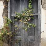 """""""Wildflower Next to a Door"""" by rhamm"""
