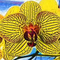 """Yellow Orchid Bloom In Fauvism"" by Kirtdtisdale"