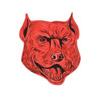 Pitbull Dog Mongrel Head Drawing