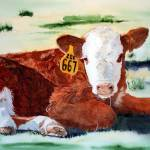"""Hereford Calf"" by mozache"