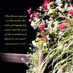"""Song of Solomon"" by Wintercreeks"