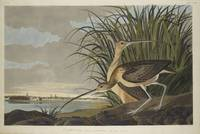 John James Audubon, Long-billed Curlew, 74_27_3#23