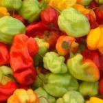 """""""Mixed Peppers"""" by Designermite"""