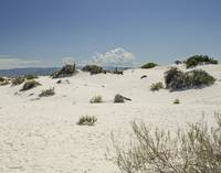 White Sands Dune Path