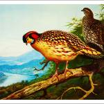 """The Pheasands - Archibald Thorburn 4"" by motionage"