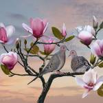 """Turtle Doves in Magnolia Tree"" by spadecaller"