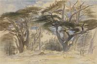 Edward Lear; The Cedars of Lebanon