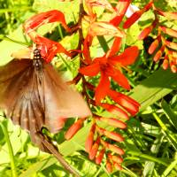 """1143 2016 08-August 01 Butterflies ©Rob Worth Jr"" by Photomarketingusa"