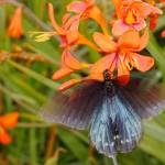"""1077 2016 08-August 04 Butterflies ©Rob Worth Jr"" by Photomarketingusa"