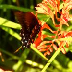 """1136 2016 08-August 01 Butterflies ©Rob Worth Jr"" by Photomarketingusa"
