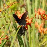 """1169 2016 08-August 01 Butterflies ©Rob Worth Jr"" by Photomarketingusa"